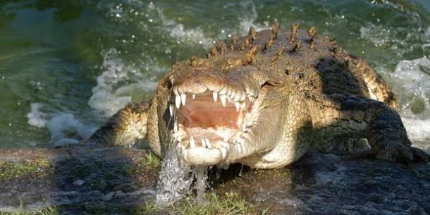 Gatorland Go Card Attraction