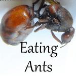 eating ants sq 150
