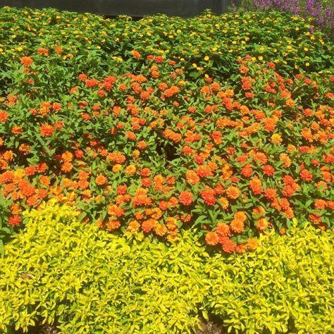 Colorblast #flowers