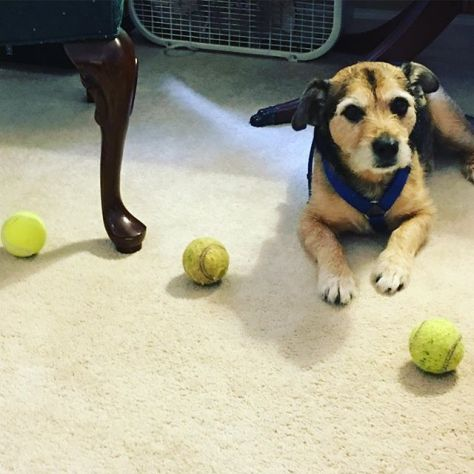 Take it from Edgar, it's good to have options.  #dogsofinstagram #patterdale