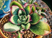 Succulent on Mosaic Table