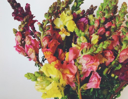 flowers for moto monday