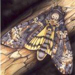 Esos otros habitantes del colmenar: Esfinge calavera, Acherontia atropos