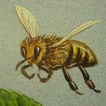 Encarna, investigación con abejas