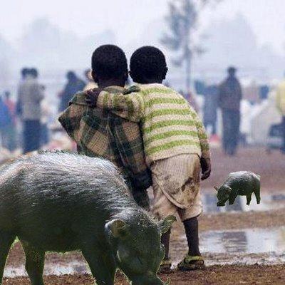 Africa cerdo