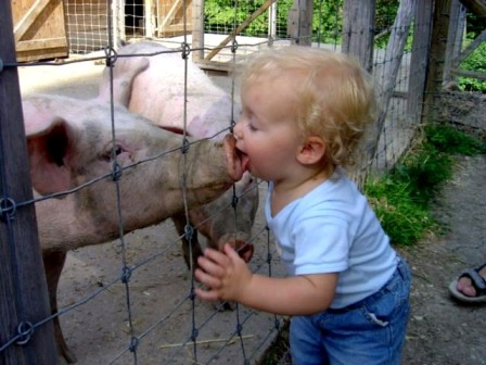 origen-de-la-gripe-porcina