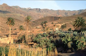 Typical lowland vegetation of the Canary Islands - semi arid and with palm trees.