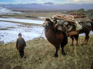 Young boy with Bactrian camel, Mongolia