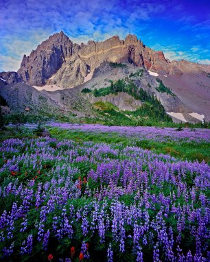 """Canyon Creek Meadow"" , Three Fingered Jack"