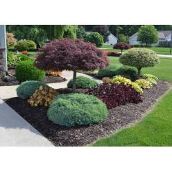 Small Crop Of Basic Backyard Landscaping