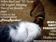 MIKEs DAILY PODCAST 919 Boxer Meets Old English Sheepdog
