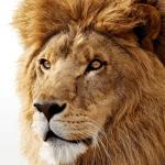Πρώτες εντυπώσεις απο το (i)OSX Lion !