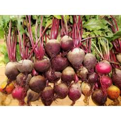 Small Crop Of How To Store Beets