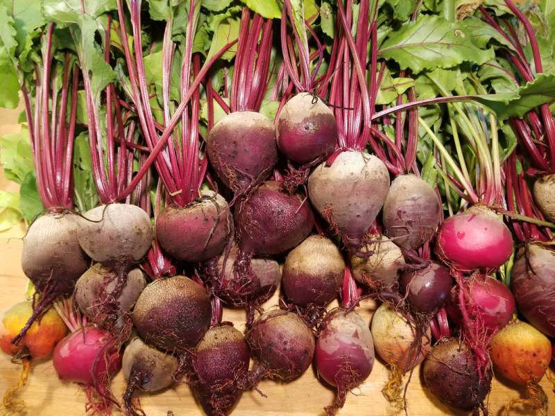 Large Of How To Store Beets