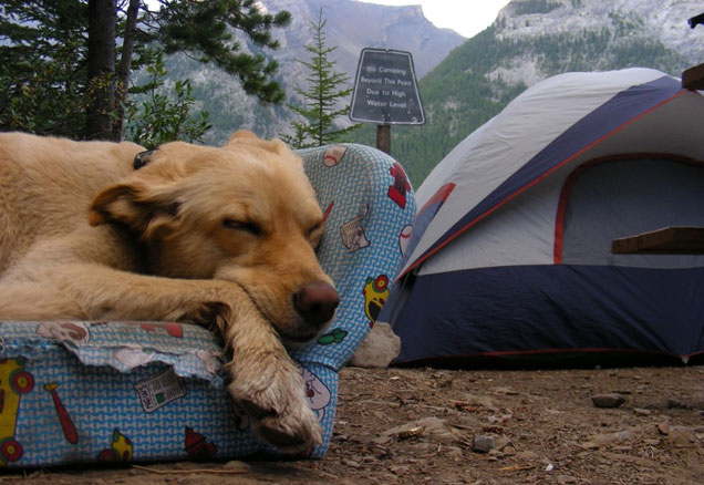 Camping with your dog: Millennial Magazine