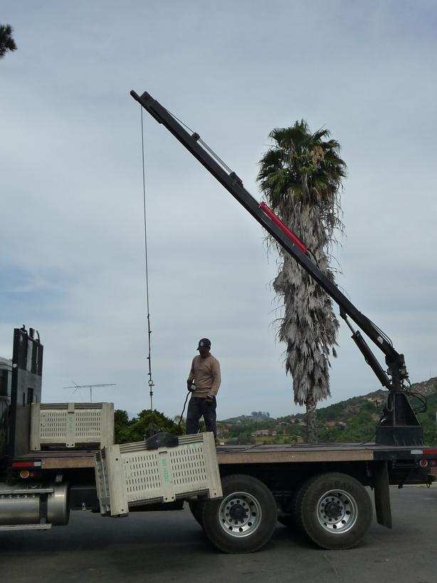loading the avocado truck