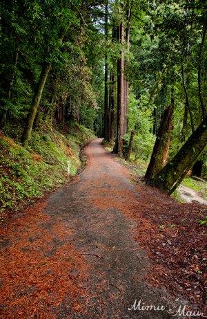 redwoodpath