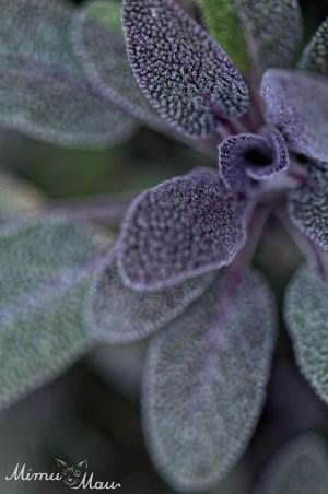 purplesage