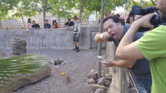 Aquí dejé que fuera Antonio Rentero quien se encargada de dar de comer a los pequeños suricatas pero les quería quitar la comida... y eso que estaban... vivos