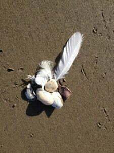 Haskell's Beach, Goleta