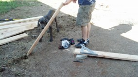 Then halved all the 8' lumber to make the 4' planks that are the total width of the steps, Denver likes to help.