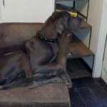 This is where he sits, I thought he was too big for the furniture but he seems to adjust well ;-)