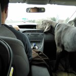 And, for our road trip Denver gets to play copilot, we took the front seat out for him, I get the back seat with MiniM