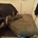 Trying out his new bed which I made to save my couch