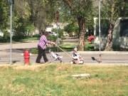 Grandma helps by watching the turkies