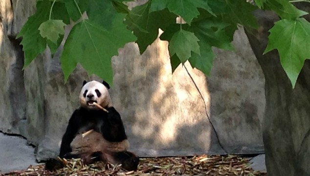 Chengdu Panda Breeding Research Base