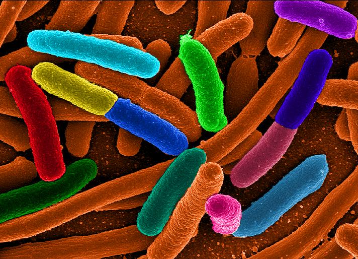 ¿Podemos aprender economía de las bacterias?