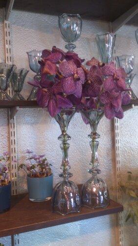 orchid orkidé