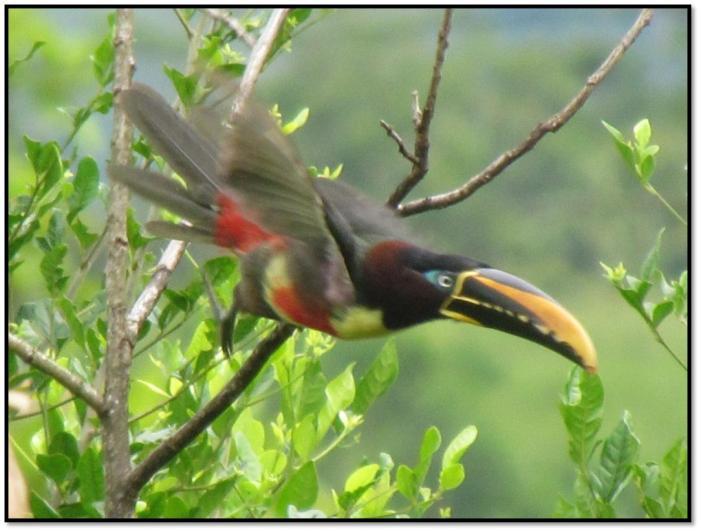 El sur de la Amazonía, un distrito especial constitucional