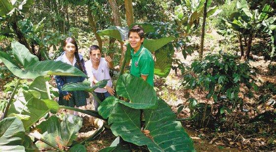 El biocombustible de un estudiante colombiano que impactó a Google