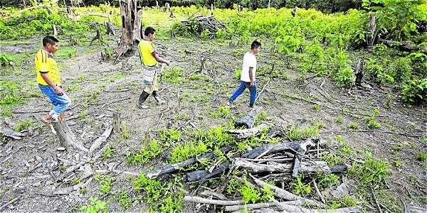 Bosques y peces, los más afectados por delitos ambientales en Putumayo