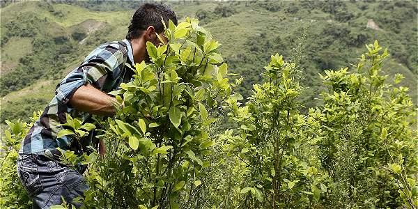 Resultado de imagen para Coordinadora Nacional de Cultivadores de Coca, Marihuana y Amapola (COCCAM)