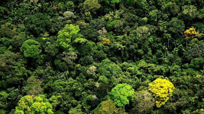 Bosques conservados por pueblos indígenas generan millones de dólares en beneficios en Colombia, Brasil y Bolivia