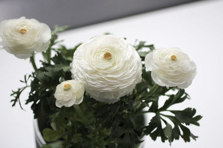 Ranunculus-2