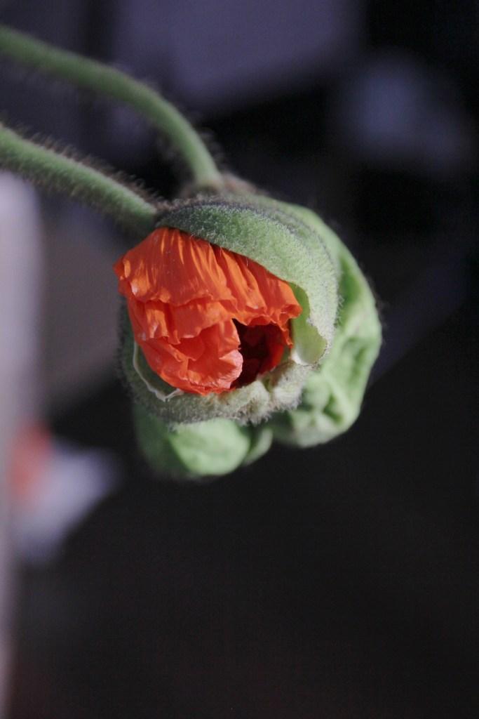 flower market - 4