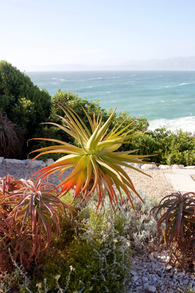 south-africa-12-16-35