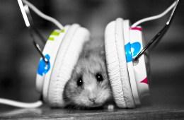 Hamster-Listen-To-Music