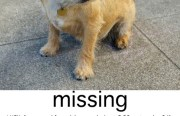 MISSING-LUCY