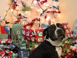 Tyson watches over gifts at Bernal Dwellings.