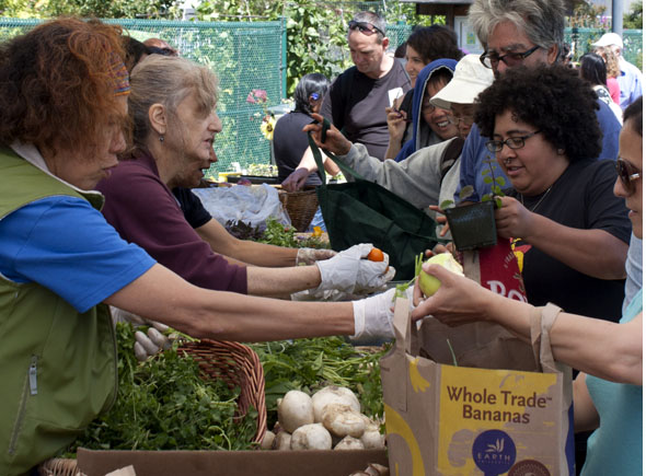 It is probably not as fresh as the Free Farm Stand, August 2011 By John Osborn