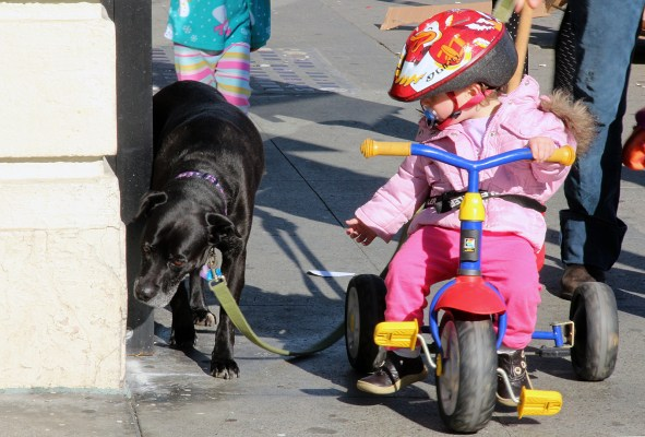 A little girl looks at a dog on Valencia Street.