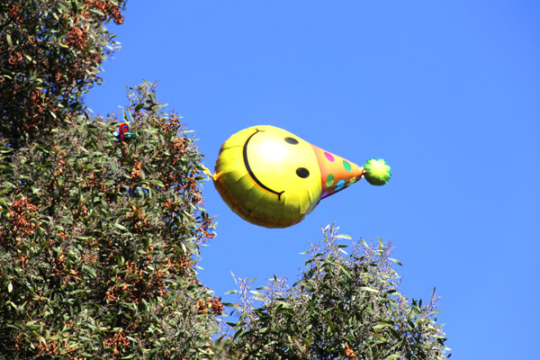 "A balloon stuck in a tree floats in the wind at Dolores Park. Photo by birthday girl, <a href=""http://missionlocal.org/author/dorothy_atkins/"">Dorothy Atkins</a>."