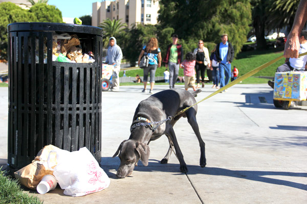 "A dog sniffs an overflowing trash can in Dolores Park on Sunday afternoon. ""There should be more trash cans,"" said 39-year-old San Francisco resident Osana Avanesova. ""I feel like there's never enough and that's weird. It's a simple thing to fix."""