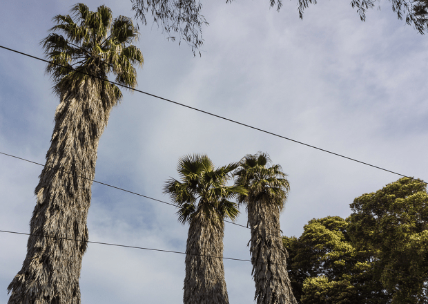 03.08.14 Dolores Palms by Gerard Livernois