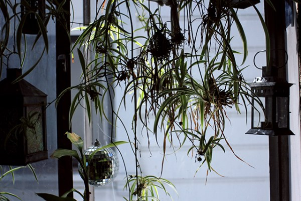 At Dogpaw´s house there are plants everywhere. This is from his kitchen. Photo by Claudia Escobar