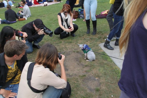 The typical sight: Photographers flocking to the first cat in sight, likely primed for internet glory with the world's next best cat picture. Photo by Joe Rivano Barros.